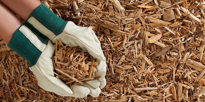 Compost/Soil